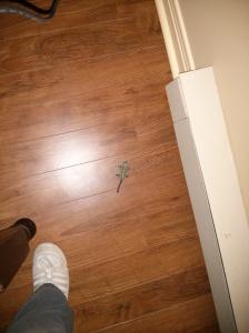 Matt's Toy Lizard